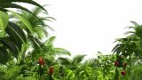 Growing Tropical Forest stock footage
