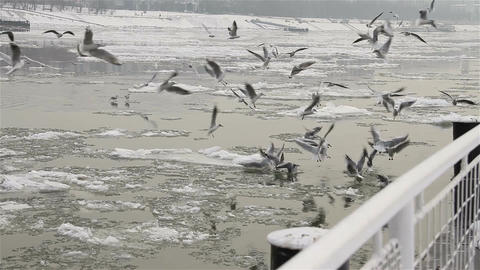 Seagulls over Icy River 01 Footage
