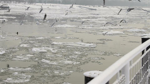 Seagulls over Icy River 01 Stock Video Footage