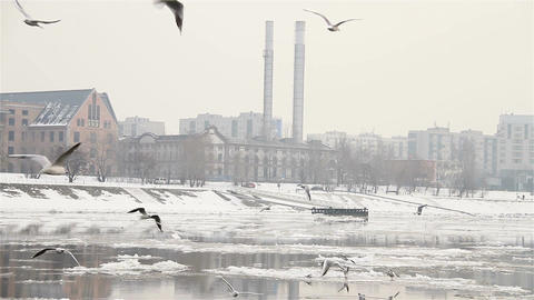 Seagulls over Icy River 03 city with sound Stock Video Footage