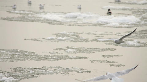 Seagulls over Icy River 05 with sound Stock Video Footage