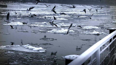Seagulls over Icy River 07 Stock Video Footage