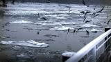 Seagulls over Icy River 07 Footage