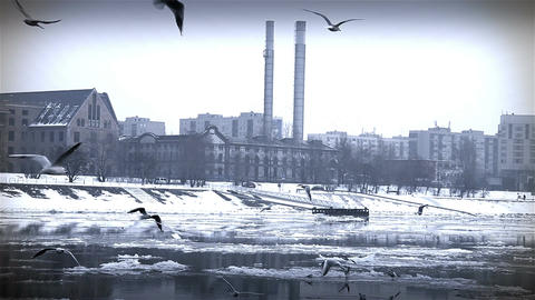 Seagulls over Icy River 09 city with sound Stock Video Footage
