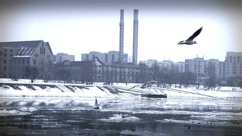 Seagulls over Icy River 09 city with sound Footage