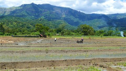 Rice Plantation In Sri Lanka stock footage