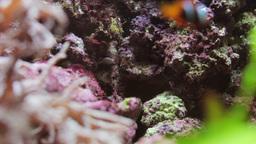 fish sealife marine aquarium wildlife underwater Footage