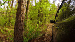 Riding Along The Forest Road stock footage