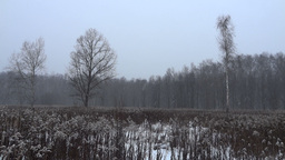 snow falls in the forest Footage