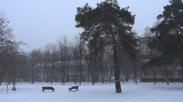 Two lonely benches and tree Footage