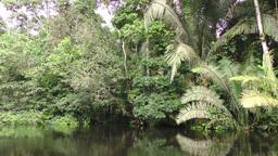 Amazonian vegetation on Cuyabeno river Footage