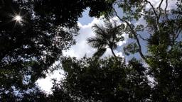 Cloudy sky seen trough dense Amazonia jungle Footage