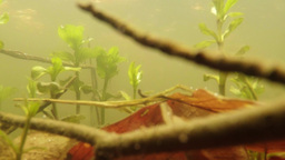 tadpoles - cubs frogs in small wetlands mountain lakes close-up in a pool of spr Footage