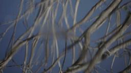 escondido birds wildlife nature avian water wetlands mexico Footage