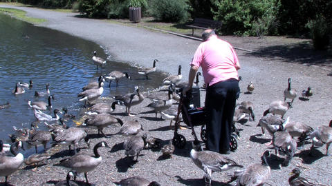 Senior Feeding Ducks Stock Video Footage