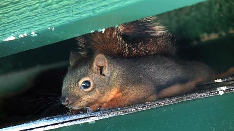 Squirrels 1