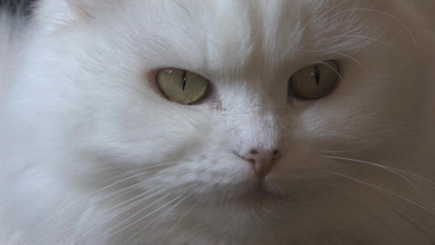 Cat Close Up Stock Video Footage