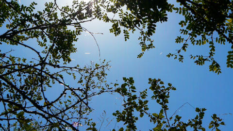 Trees, sun and sky background Stock Video Footage