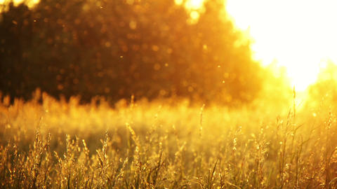 field of grass and sunset Stock Video Footage