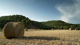 harvest field nature countryside wheat Footage