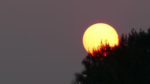 large sun sets behind tree - telephoto Live Action