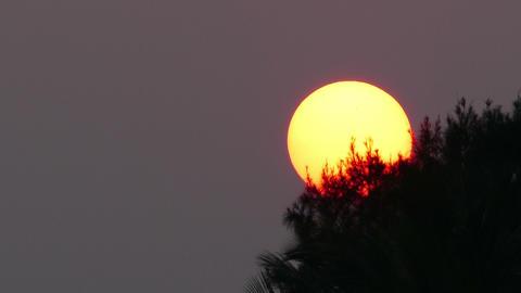 large sun sets behind tree - telephoto Footage