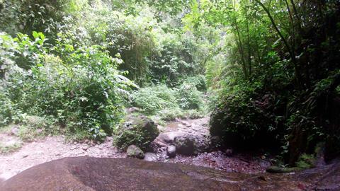 Ecuadorian rainforest HD Footage