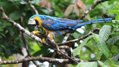 Free ara macaw Footage
