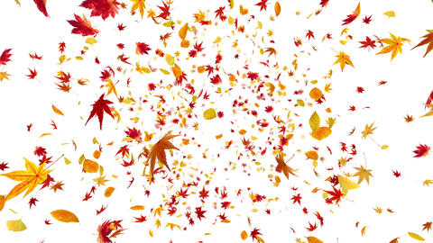 Autumn Leaf front Aw 4 K Animation