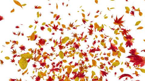 Autumn Leaf fountain B 4 K Animation