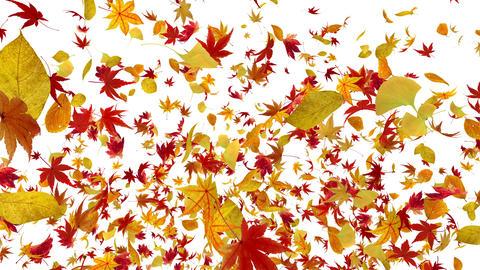 Autumn Leaf fountain A 4 K Animation