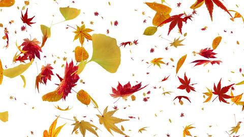 Autumn Leaf tornado Bw 4 K Animation