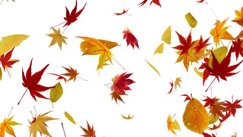 Autumn Leaf tornado G 2w 4 K Animation