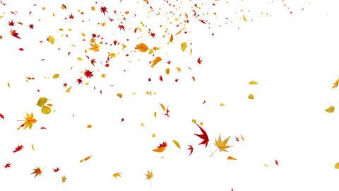 Autumn Leaf tornado Ja 4 K Animation