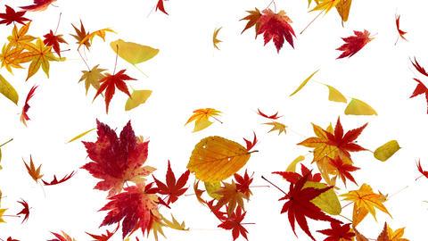 Autumn Leaf tornado Gw 4 K Animation