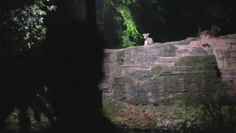 Silhouette Of Man Watching Singapore Night Safari stock footage