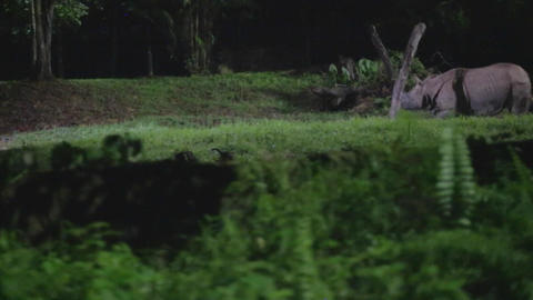 singapore night safari - indian rhinoceros side angle Footage