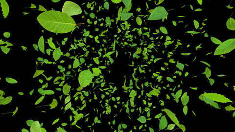 Green Leaf front Ab 4 K Animation