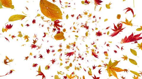 Autumn Leaf front Dw 4k Animation