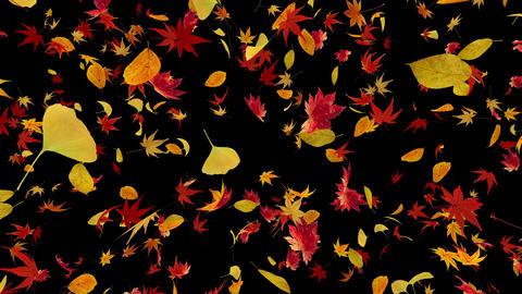 Autumn Leaf front Db 4k Animation