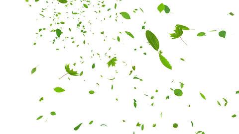 Green Leaf tornado Jb 4 K Animation