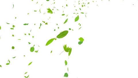 Green Leaf tornado Jb 2 4 K Animation