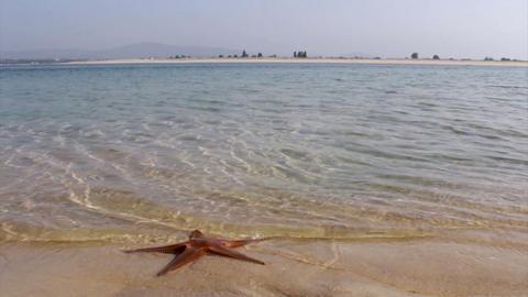 Ria Formosa Armona Island Star F stock footage