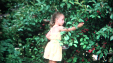 (8mm Film) Girl Picking Cherries From Bush 1958 stock footage