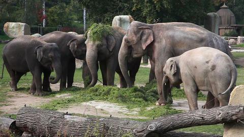 Elephant Zoo Footage