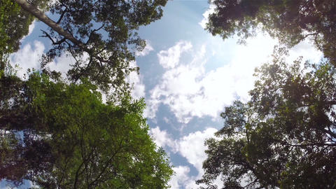 Sky through jungle trees, steadicam shot Footage