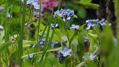 blue flower in a garden in the grass Footage