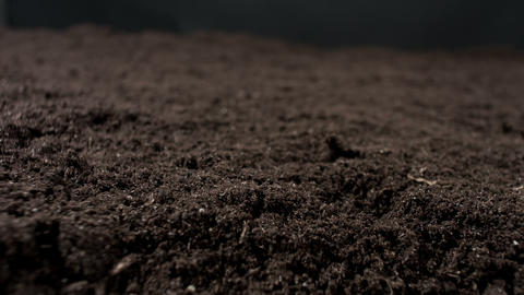 Ground Nature Background stock footage