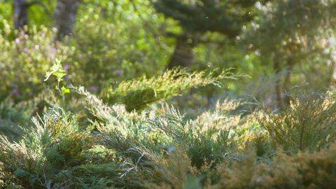 Tranquil morning scene of the glade in the forest Footage