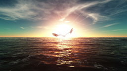 Eagle Animation